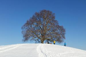 b linde bronnweiler